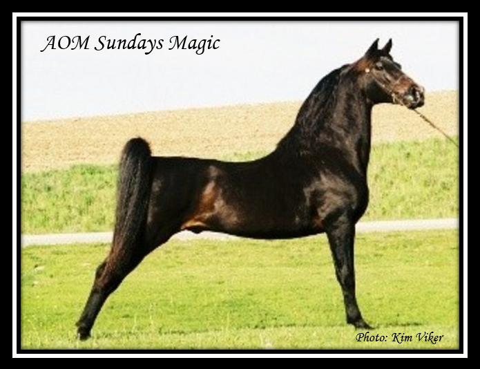 AOM_sundays_magic
